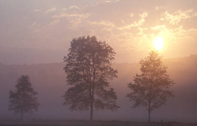 Sun Will Clear the Morning Fog