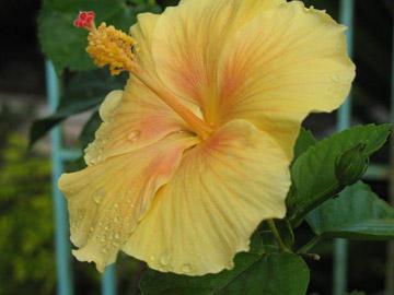 yellow flower.. by unchainedgirL