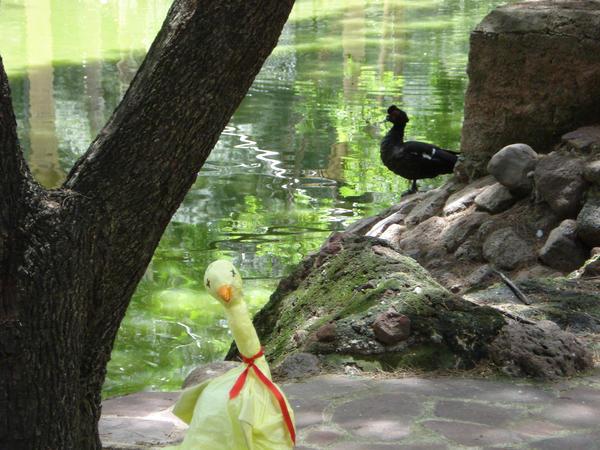 Poyo estanque de patos by kittyshadow on deviantart for Estanques para patos prefabricados