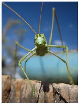 W.A. Bug