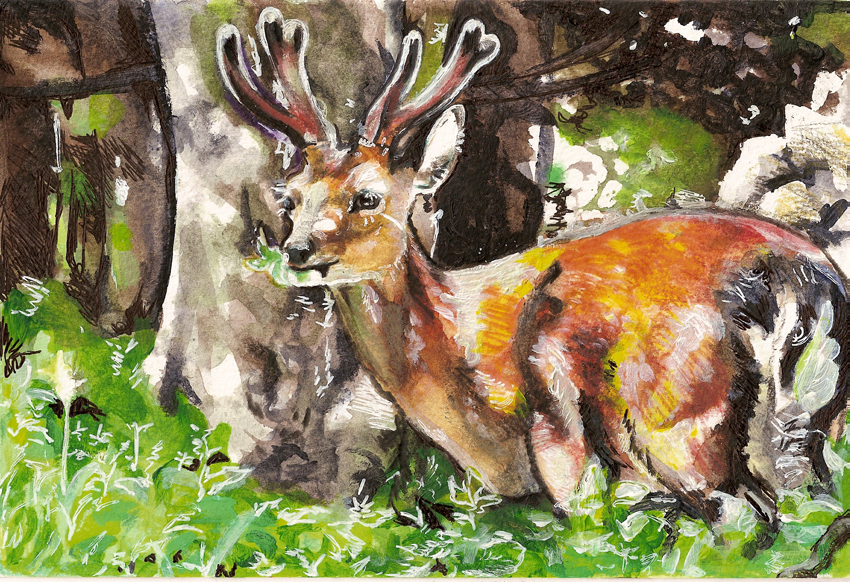 the young stag by Tifaerith