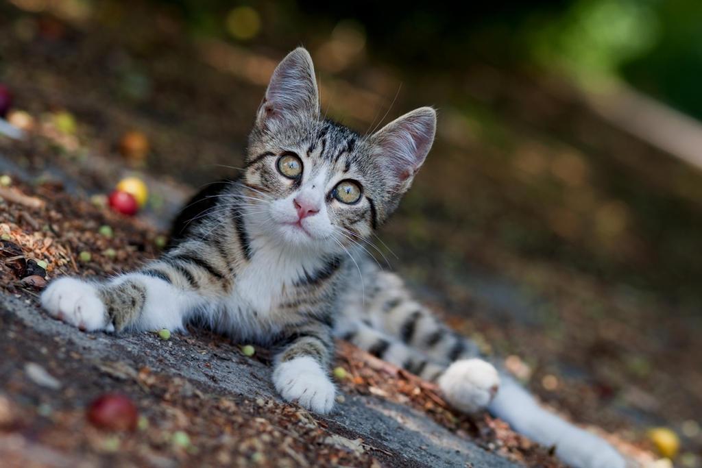 [Image: Kitten_adn_plums_by_BogdanBoev.jpg]