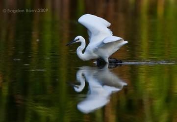 Reflection by BogdanBoev