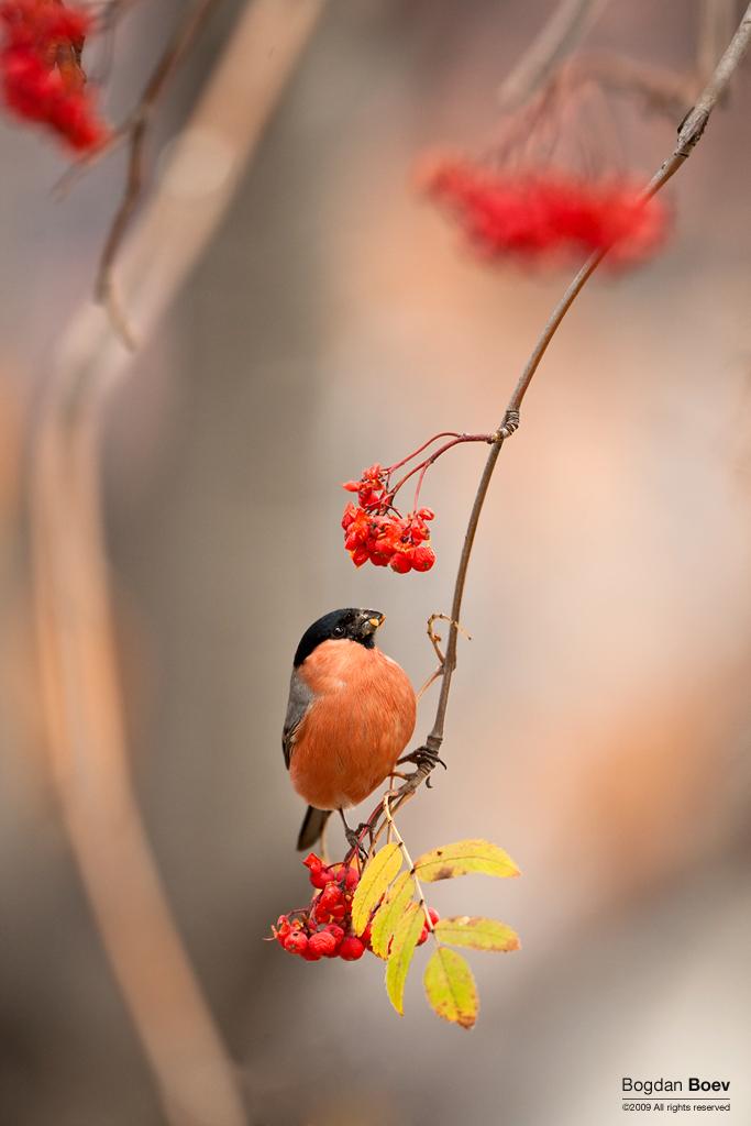 Autumn spirits by BogdanBoev