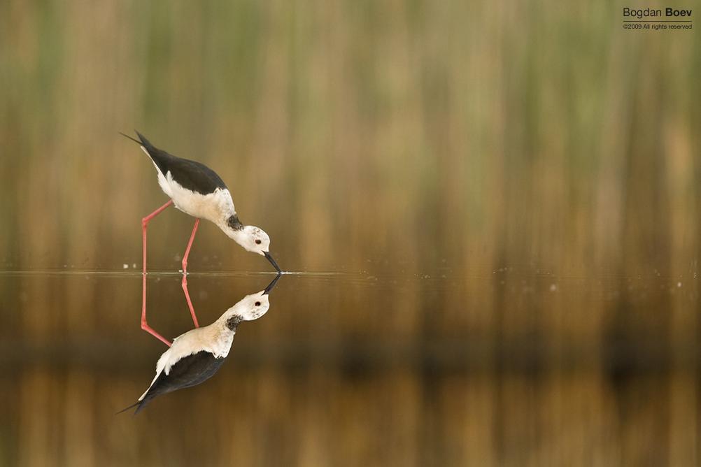 Flip Mirror by BogdanBoev