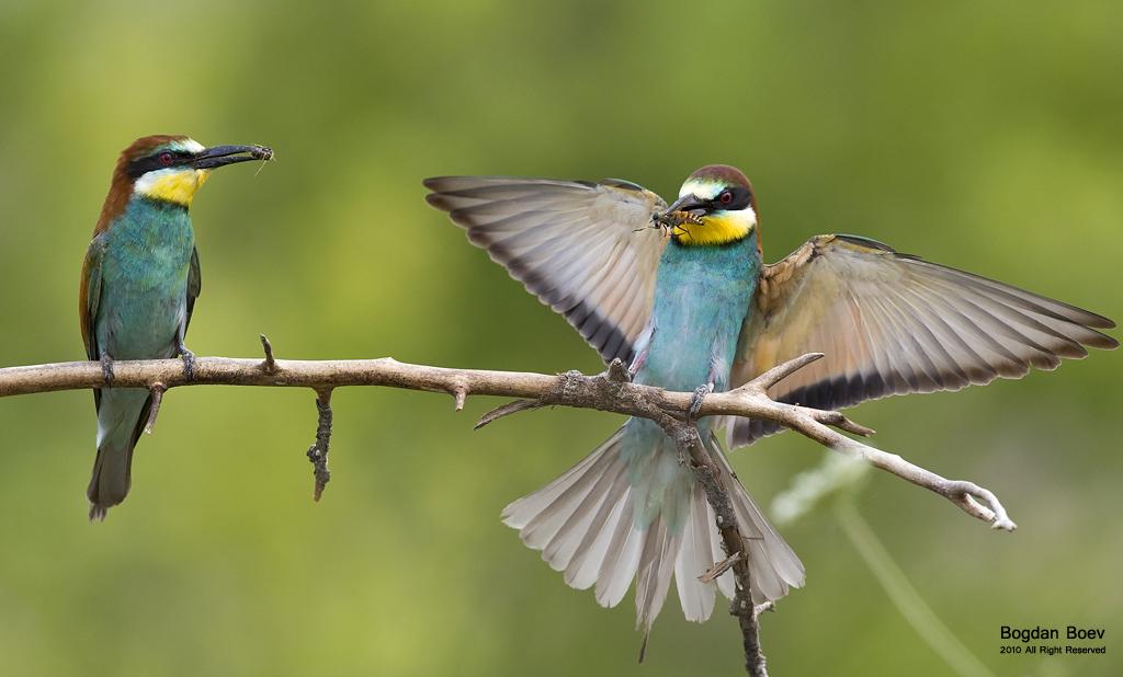 Bug hunters by BogdanBoev