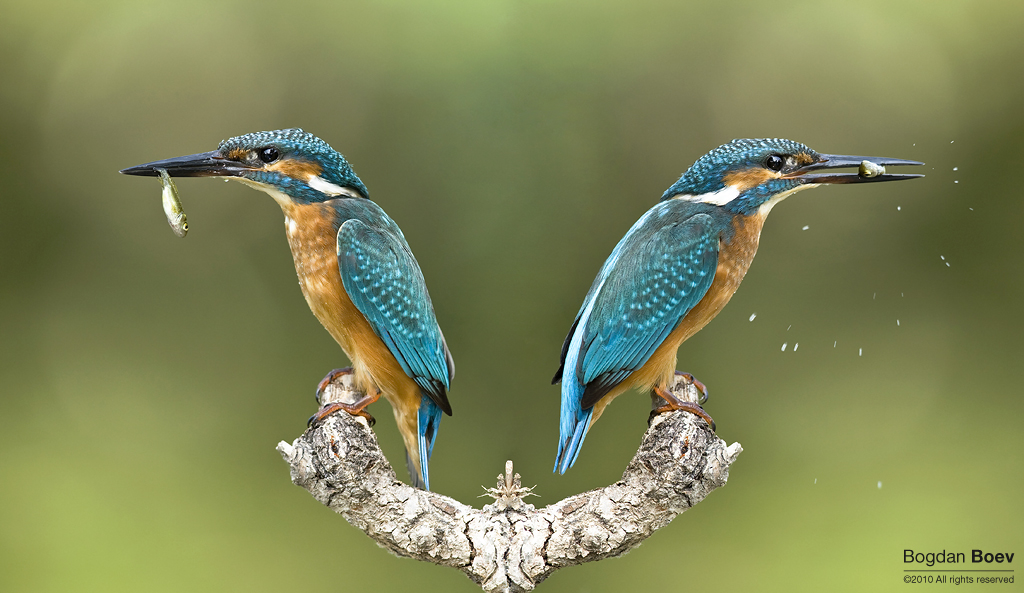 Parallel Worlds by BogdanBoev