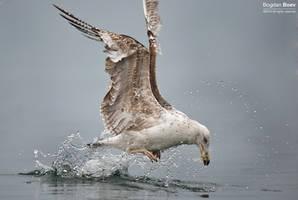 Splash by BogdanBoev
