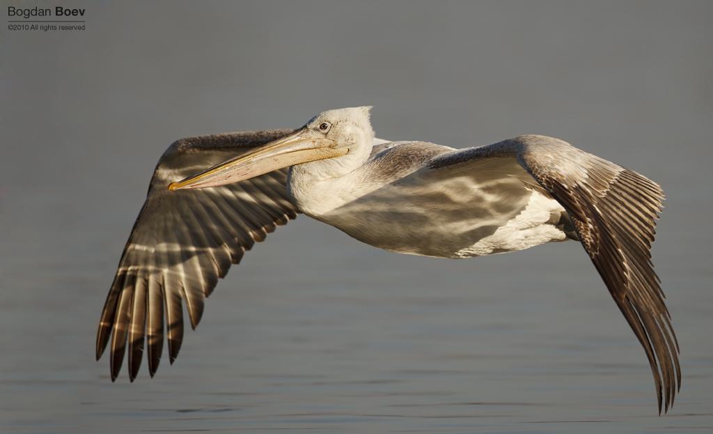 Glider by BogdanBoev