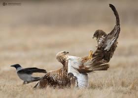 Battle Ground by BogdanBoev