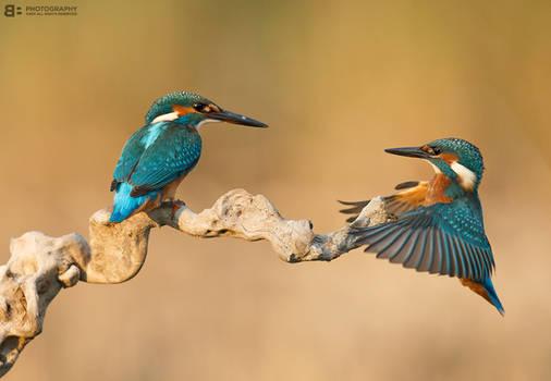 Kingfisher games