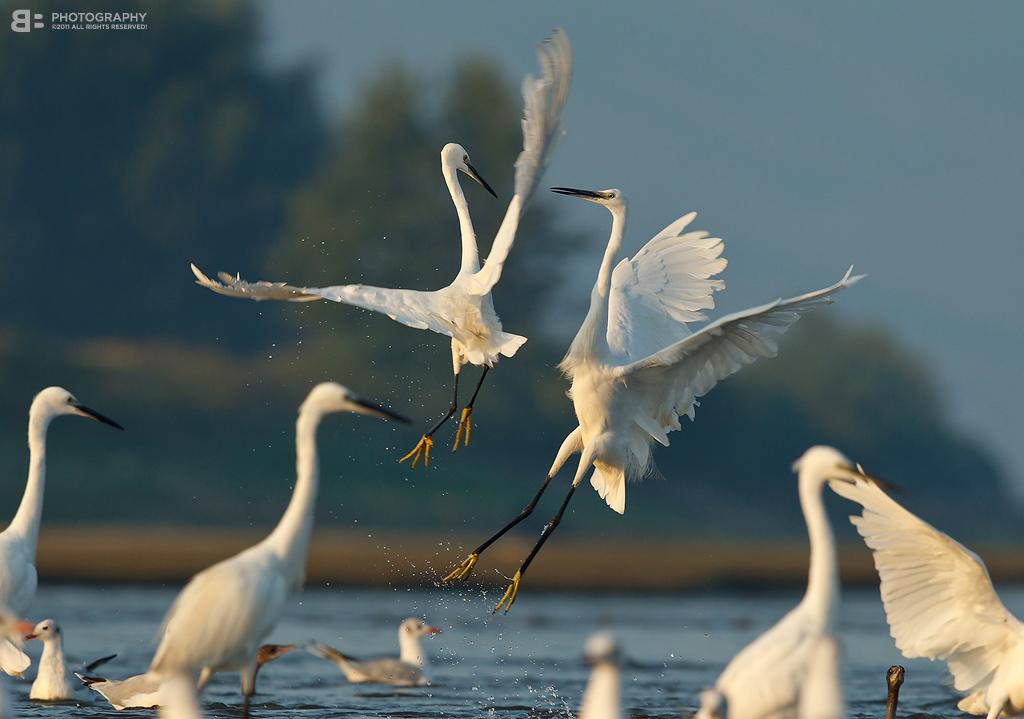 Air Dance by BogdanBoev