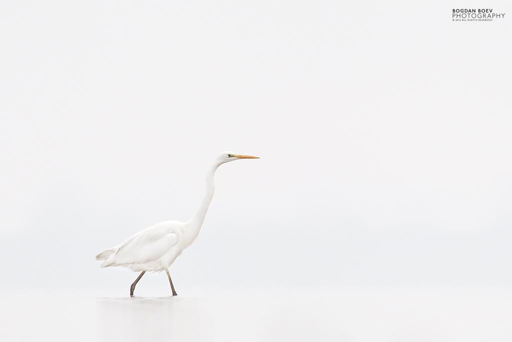 White on white by BogdanBoev