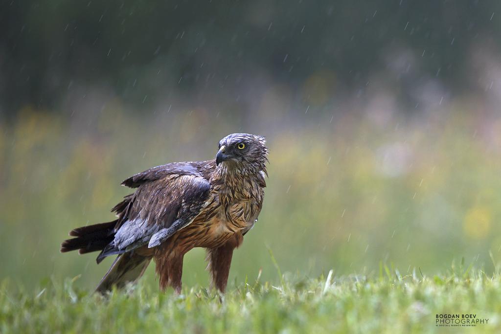 Rainy by BogdanBoev