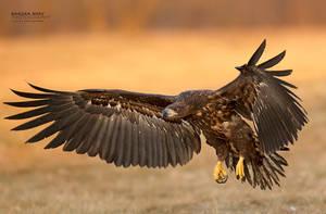 Landing by BogdanBoev