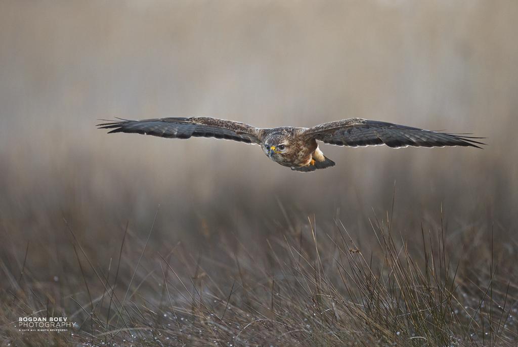 Frontal Flight by BogdanBoev