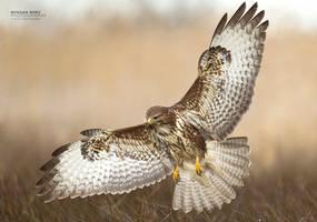 Spread Wings by BogdanBoev