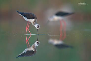 Mirror by BogdanBoev