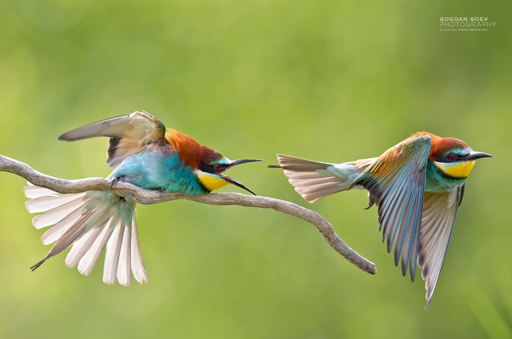 Conflict by BogdanBoev