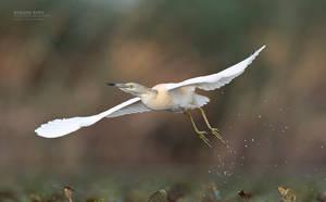 Take off by BogdanBoev