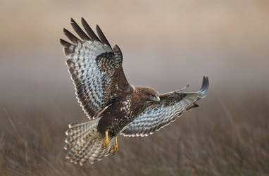 Wings by BogdanBoev