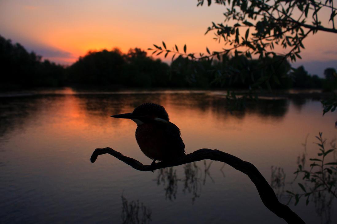 River's dawn by BogdanBoev