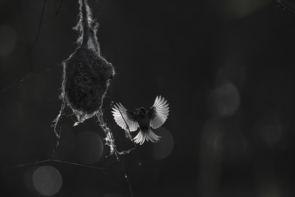 Angel by BogdanBoev