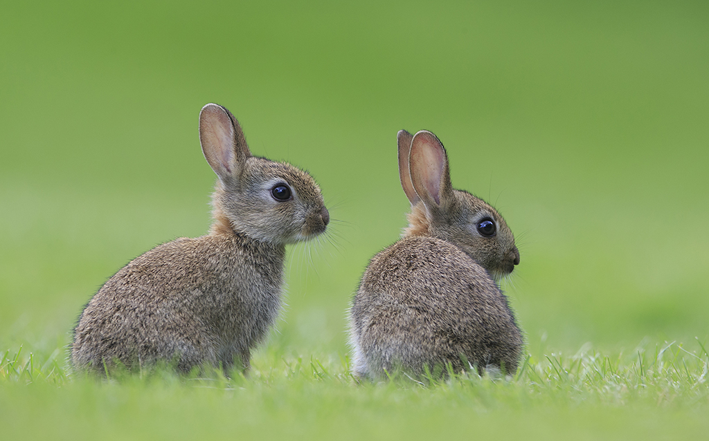 Young Rabbits by BogdanBoev