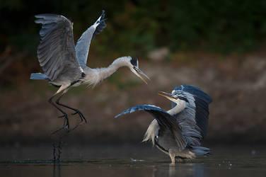 Matrix fight herons