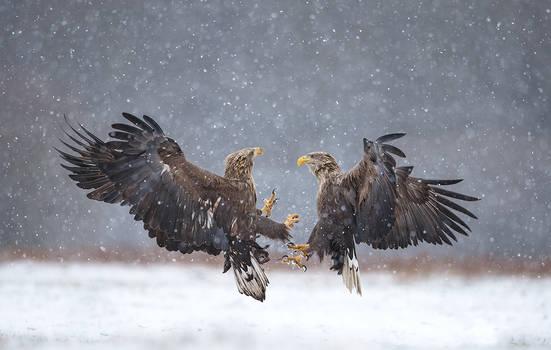 Snowy fight
