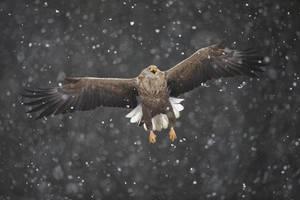 Through the blizzard by BogdanBoev