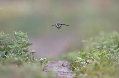 Tiny Jet by BogdanBoev