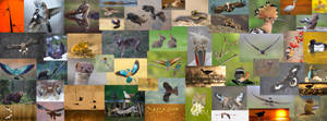 Wildlife mozaic