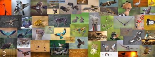 Wildlife mozaic by BogdanBoev