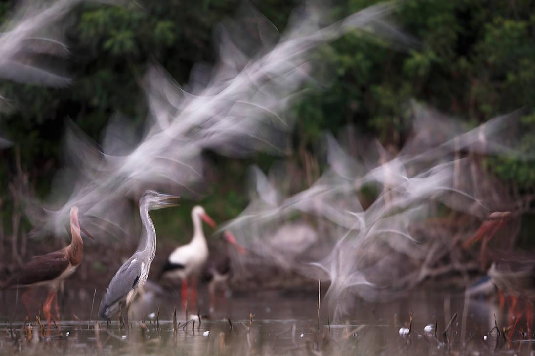 A half second of birds by BogdanBoev