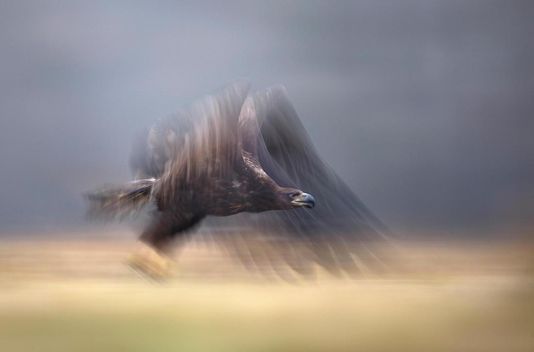 Eagle's spirit by BogdanBoev