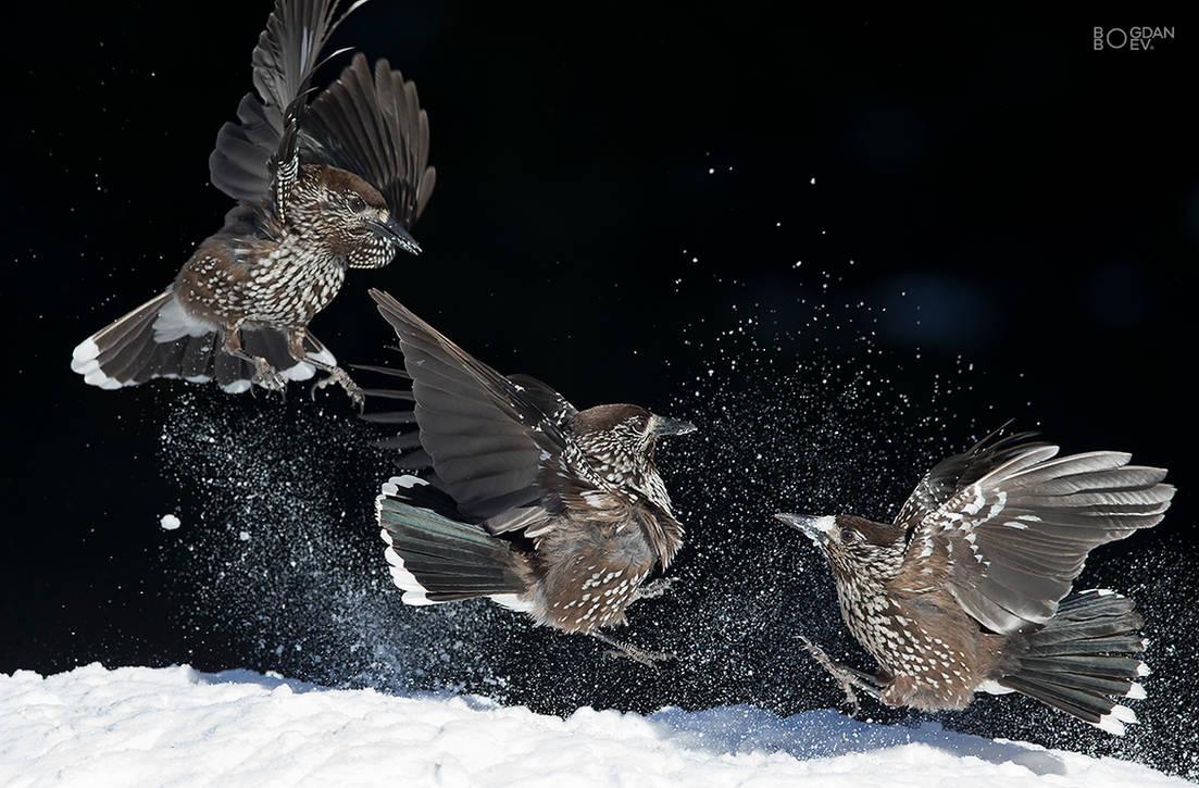 Snow games by BogdanBoev