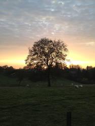 Tree under Sunset Clouds