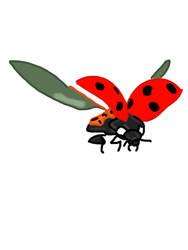 Ladybug by Anira