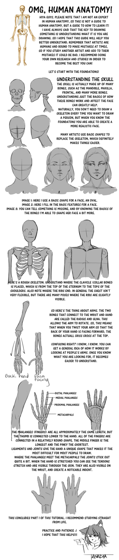 Anadia's Guide to Anatomy Part 1 by Anadia-Chan