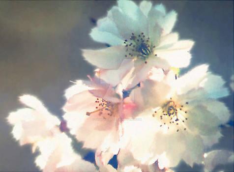 Cherry Blossom Zen