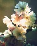 Cherry Zen
