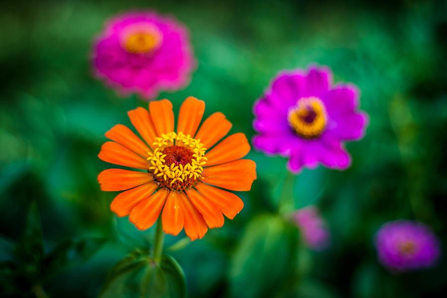 Flower by Garet-Neall