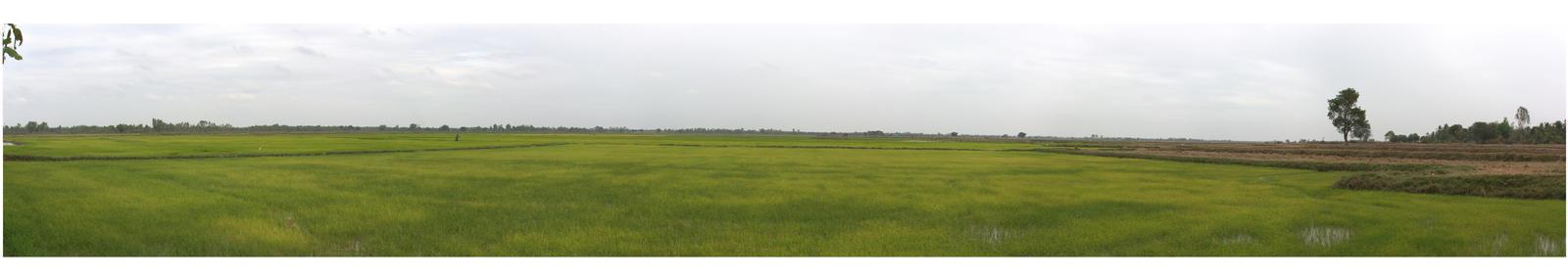 Thai Rice Paddies by Mylniar
