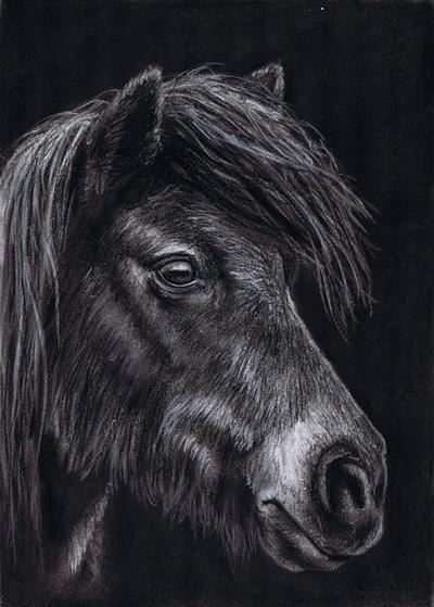Hairy Pony by Skarbog