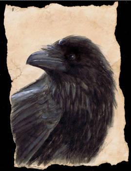 Inktober 30 raven