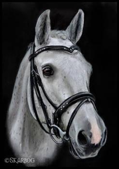 Groomed Horse