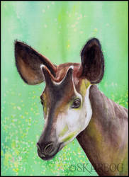 Okapi-skarbog