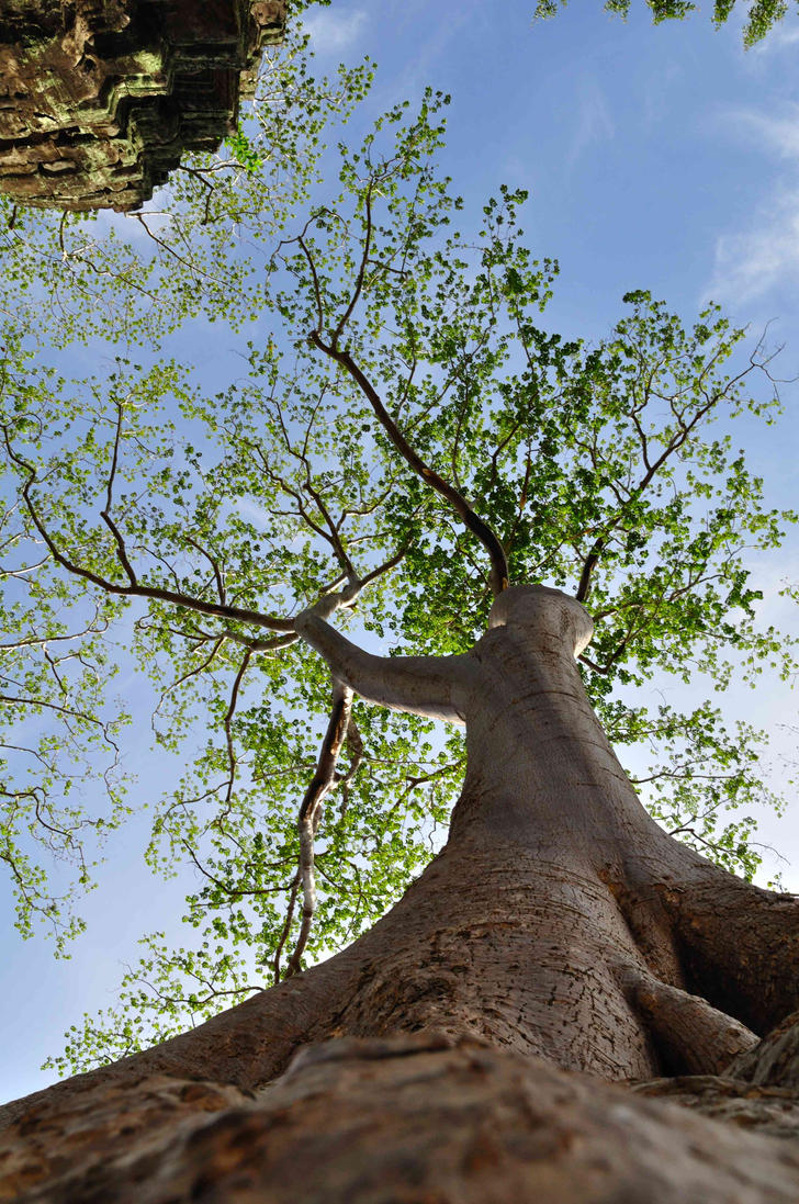 Tree by gito-kribo