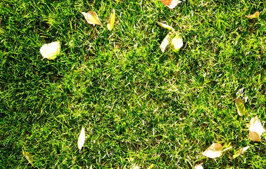Free High Quality Grass Texture
